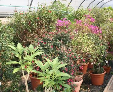 Ihre Pflanzen  haben viel Licht bei der Überwinterung